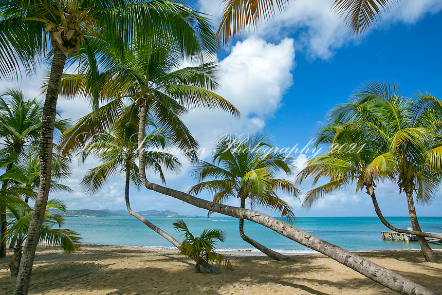 Mermaid Beach<br /> The Buccaneer Resort<br /> St. Croix<br /> US Virgin Islands
