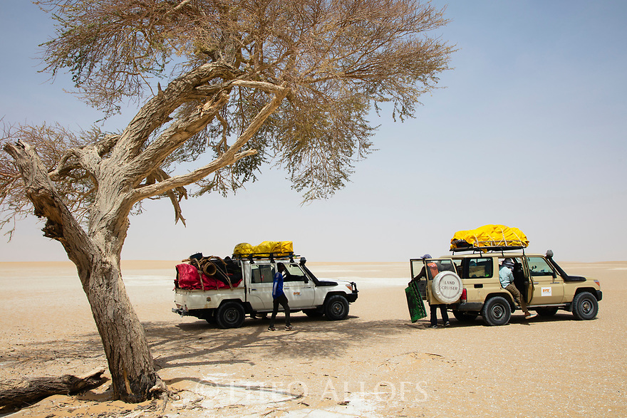 Chad (Tchad), North Africa, Sahara, Borkou District, tourist vehicles parked in shad of acacia tree