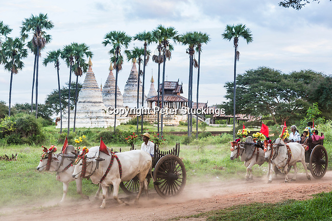 Bullock carts transport local people and tourists around the temples of Bagan, Myanmar