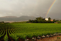 Baglio di Pianetto vineyard, Sicily, Itlay