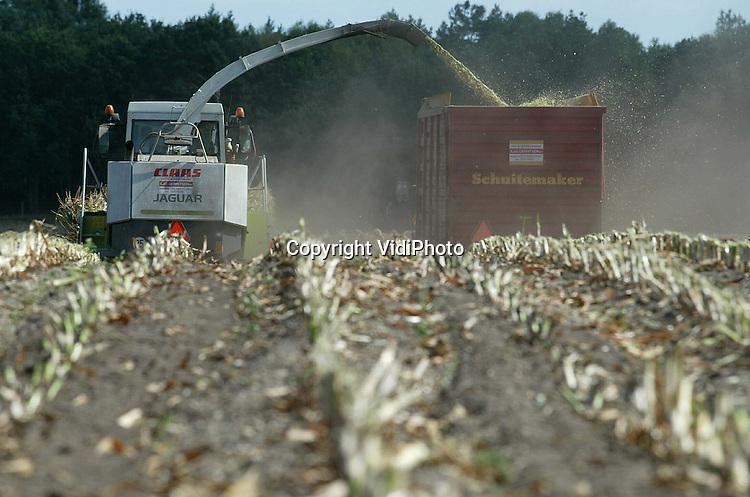 Foto: VidiPhoto..RENKUM - Loonwerker Gerritsen uit Renkum hakselt donderdag de 10 hectare maïs achter zijn bedrijf. Loonwerkers zijn op de Veluwe ruim een maand eerder dan normaal begonnen met de maïsoogst. Door de droogte is de kwaliteit van de maïs bijzonder slecht. Om te voorkomen dat de kolven helemaal uitdrogen wordt er op de hoger gelegen gronden alvast begonnen met de oogst.