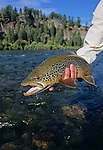 08219-D. An angler holds a brown trout caught on the South Fork of the Snake River, Idaho.