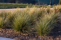 Grasses in the setting sun.