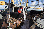 Dutch fishing vessel on the North Sea fishing for Sole and Flounder