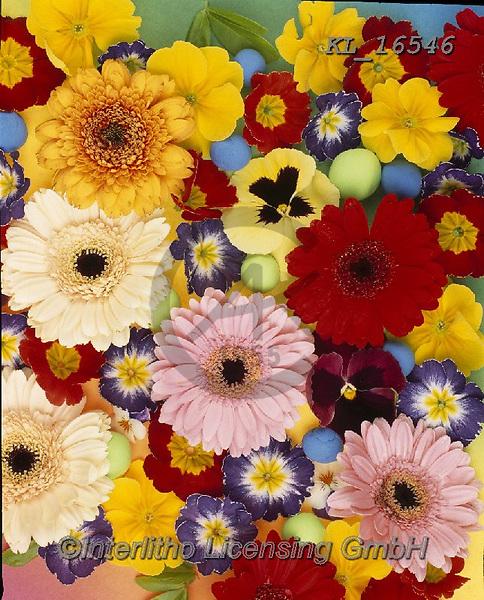 Interlitho-Alberto, FLOWERS, BLUMEN, FLORES, photos+++++,flowers,KL16546,#f#, EVERYDAY
