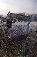 Europe/France/Centre/37/Indre-et-Loire/Chinon: Le château et les vignes - AOC château de l'Echo, taille de la vigne et brulage des sarments en hiver