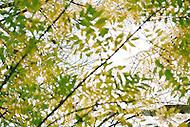 Image Ref: DR013<br /> Location: RJ Hamer Arboretum<br /> Date: 13th April 2014