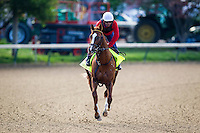 May 01, 2014: Pablo Del Monte, who drew in on the also-eligible list prepares for the Kentucky Derby at Churchill Downs in Louisville Ky. Alex Evers/ESW/CSM