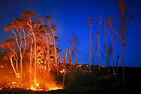 Stunning morning twilight, Advancing lava flow in the trees, From Puu Oo vent, Upper Royal Gardens subdivision, Kilauea volcano, Hawaii, USA Volcanoes National Park, Big Island of Hawaii, USA