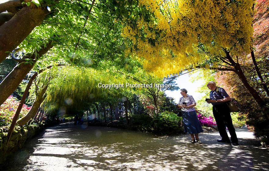 15/05/19<br /> <br /> Bill and Kathleen Walker admire the Laburnum Arch.<br /> <br /> Bodnant Garden, Conwy, North Wales.<br /> <br /> All Rights Reserved, F Stop Press Ltd +44 (0)7765 242650 www.fstoppress.com rod@fstoppress.com