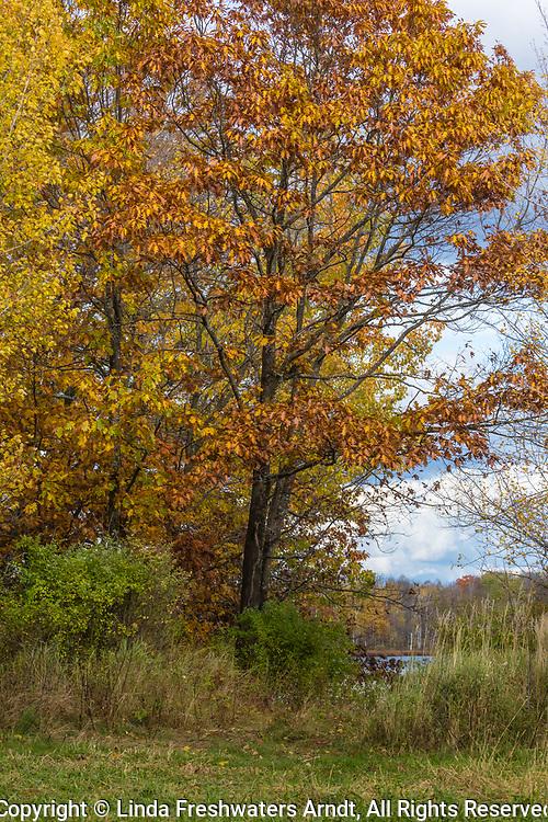 Autumn in northern Wisconsin.