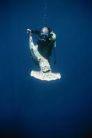 scalloped hammerhead shark, Sphyma lewini, finned alive, thrown overboard to drown. Cocos Island, Costa Rica - Pacific Ocean