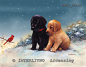 GIORDANO, CHRISTMAS ANIMALS, WEIHNACHTEN TIERE, NAVIDAD ANIMALES, paintings+++++,USGI2531M,#XA# dogs,puppies
