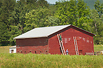 Nippenose Valley, Lycoming County, PA. Amish women painting corn shed.