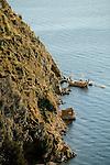 Port Scenic