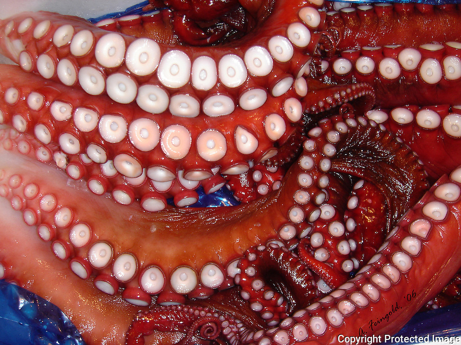 Tokyo Fish Market, Octopus, Fresh Seafood, Tentacles, Tokyo, Japan, Sushi<br /> <br /> CLICK ON ADD TO CART ABOVE TO SEE AVAILABLE STYLES, SIZES AND PRICES