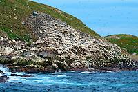 Gull Island, Newfoundland