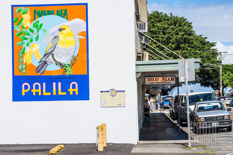Beautiful artwork of the native endangered palila bird on the side of a building in downtown Hilo, Big Island of Hawai'i.