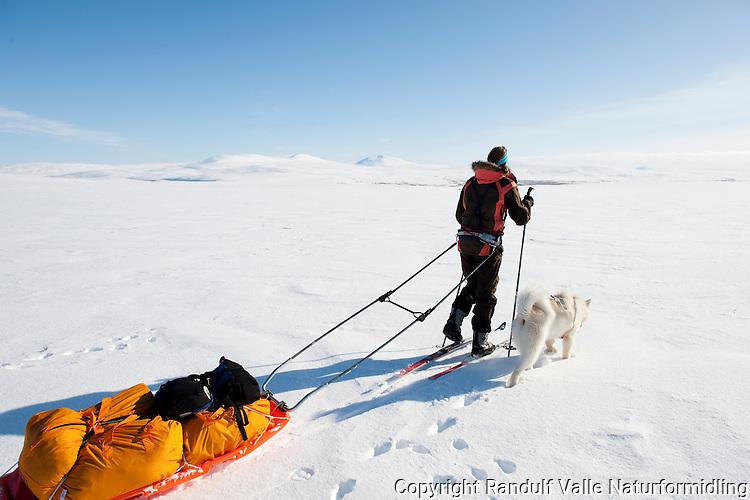 Dame trekker pulk i flott vintervær på Finnmarksvidda. ---- Woman pulling sled in good weather.