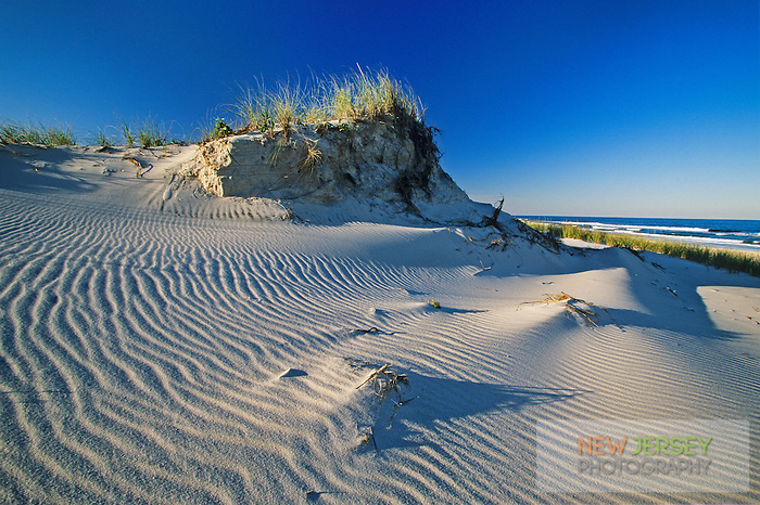 Primary Sand Dunes, dune erosion and Atlantic Ocean, Island Beach State Park, New Jersey