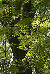 A tree seen in the Esopus Bend Nature Preserve, in Saugerties, NY, on Friday, September 1, 2017. Photo by Jim Peppler. Copyright/Jim Peppler-2017.