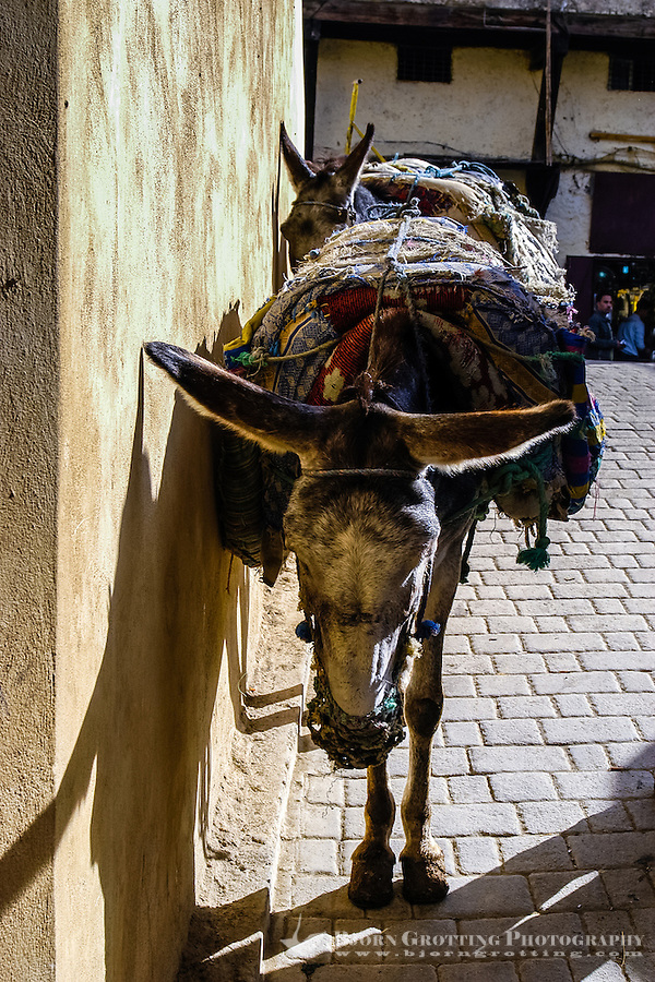 Morocco. Two donkeys getting some rest. The medina in Fes, Fes el Bali, is on UNESCO's World Heritage Site list.