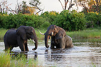 Elephant bulls enjoying a bath