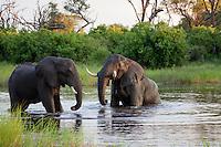 Elephant bulls enjoying a bath