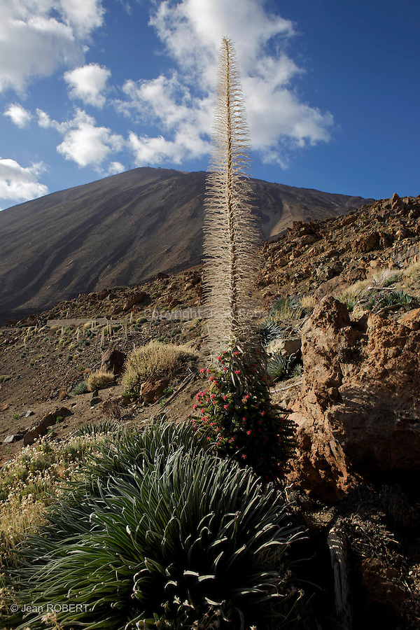 parc national du Teide. Ile de Tenerife..National park del Teide. Tenerife island