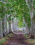 Plane (Platanus sp.) tree tunnel, Provence, France<br /> <br /> Canon EOS 5D Mark III, EF70-200mm f/2.8L IS II USM lens, f/18 for 1.3 seconds, ISO 100