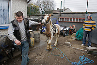 Michael Long and  John Franklin are pictured with Johns horse Cindy that he keeps in his stables in his back yard of his bungalow with his pigeons, hens and collection of motorbikes in Delmage Park, Moyross, Limerick, Ireland
