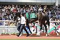 Horse Racing: Naruo Kinen at Hanshin Racecourse