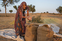 Guar farmer Kelavati Devi, 38, bags the guar beans after threshing the crop in her shared field in Rajera village, Bikaner, Rajasthan, India on October 23, 2016. Non-profit organisation Technoserve works with farmers in Bikaner, providing technical support and training, causing increased yield from implementation of good agricultural practices as well as a switch to using better grains better suited to the given climate. Photograph by Suzanne Lee for Technoserve