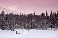 Aliy Zirkle poles along w/her team on trail near Finger Lake Chkpt 2006 Iditarod Finger Lake Alaska