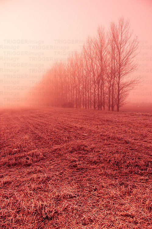 Trees in fog at Eye runway in Suffolk England