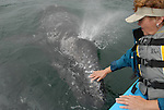 woman touching a gray whale