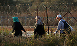 Palestinian farmers make their way to their farms to pick up olives during a harvest season, near the Israeli settlement of Ariel in the occupied West Bank city of Salfit, after Israeli authorities allowed them to harvest olives just for several days limited, on October 10, 2018. Photo by Shadi Jarar'ah