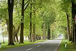 Europa, DEU, Deutschland, Nordrhein Westfalen, NRW, Teutoburger Wald, Oesterholz Haustenbeck, Allee, Baumallee, Fuerstenallee, Strasse, Landstrasse, Kategorien und Themen, Natur, Umwelt, Landschaft, Jahreszeiten, Stimmungen, Landschaftsfotografie, Landschaften, Landschaftsphoto, Landschaftsphotographie, Tourismus, Touristik, Touristisch, Touristisches, Urlaub, Reisen, Reisen, Ferien, Urlaubsreise, Freizeit, Reise, Reiseziele, Ferienziele....[Fuer die Nutzung gelten die jeweils gueltigen Allgemeinen Liefer-und Geschaeftsbedingungen. Nutzung nur gegen Verwendungsmeldung und Nachweis. Download der AGB unter http://www.image-box.com oder werden auf Anfrage zugesendet. Freigabe ist vorher erforderlich. Jede Nutzung des Fotos ist honorarpflichtig gemaess derzeit gueltiger MFM Liste - Kontakt, Uwe Schmid-Fotografie, Duisburg, Tel. (+49).2065.677997, ..archiv@image-box.com, www.image-box.com]