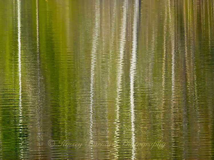 &quot;PONDERING ASPEN&quot;<br />