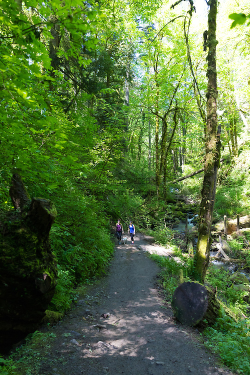 Macleay Park in Forest Park, Portland, OR, USA