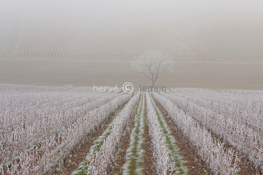 France, Cher (18), région du sancerrois, Sancerre, le vignoble sous le givre en novembre // France, Cher, region of Sancerre, Sancerre, the vineyard under the ice in November