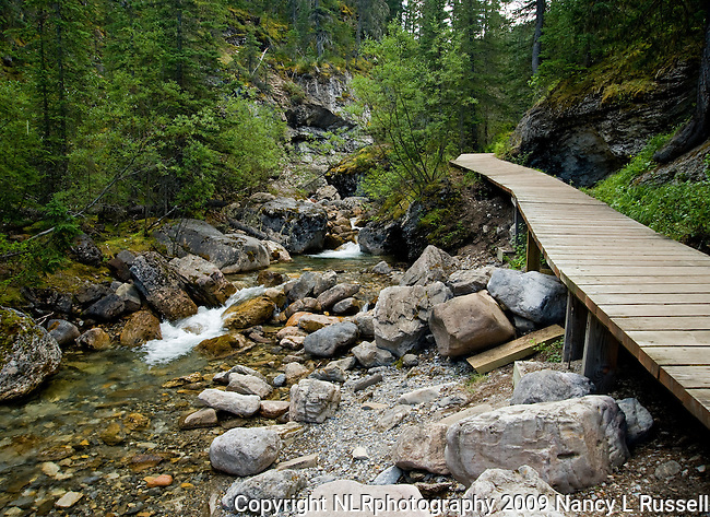 Fiddle River Trail starts on a boardwalk before entering into the forest and a quiet walk along the river in Jasper National Park
