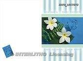 Alfredo, FLOWERS, photos, BRTOLP17573,#F# Blumen, flores
