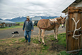 USA, Oregon, Enterprise, Cowboy and Rancher Todd Nash puts the pack saddle on his mule at the Snyder Ranch for a cattle drive in Northeast Oregon