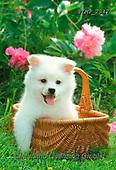 Marek, ANIMALS, REALISTISCHE TIERE, ANIMALES REALISTICOS, dogs, photos+++++,PLMP2947,#a#, EVERYDAY