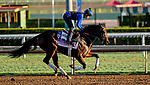 October 28, 2019 : Breeders' Cup Juvenile Fillies entrant Donna Veloce, trained by Simon Callaghan, exercises in preparation for the Breeders' Cup World Championships at Santa Anita Park in Arcadia, California on October 28, 2019. Scott Serio/Eclipse Sportswire/Breeders' Cup/CSM