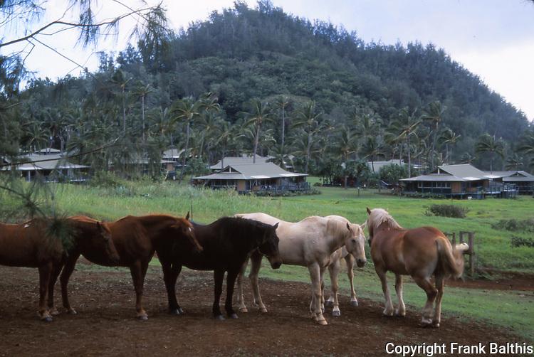 Horses in Hana