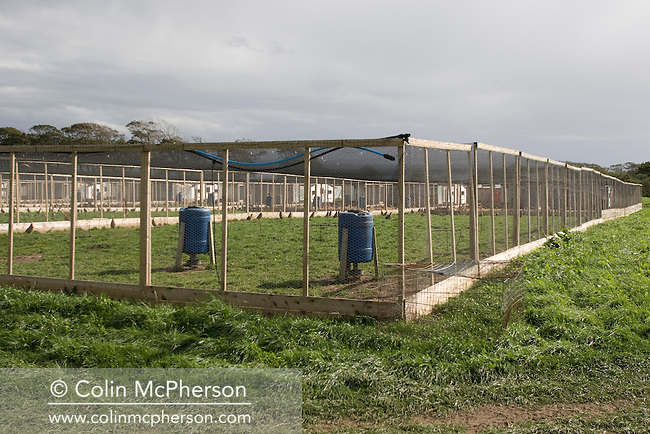 An open-air breeding pen for pheasants breeding and maturing pheasants at Hy-Fly Hatcheries, a company based in Preesall, near Blackpool, Lancashire which specialises in breeding partridge and pheasant to be sold to sporting estates. The partridges are kept in small cages for up to three years while they mature before being sold. Pheasants are also kept in cages but are transferred to outdoor pens as they mature. The company, which is owned by Ray Holden, produces around three million day-old chicks per year.