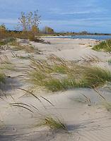 Port Crescent State Park, Michigan<br /> Dune grasses on the shore of Lake Huron