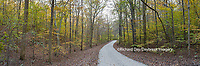 63895-14313 Road through trees in fall at LaRue-Pine Hills, Shawnee National Forest, IL